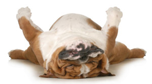 Sleeping-Dogsm